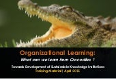 Organizational Learning: What Can We Learn From Crocodiles