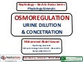 Osmoregulation (Urine Dilution & Concentration)