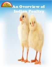 Overview of Poultry Sector.