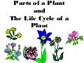 Partsofaplant powerpoint-130311173407-phpapp02
