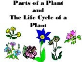 Parts of a plant/plant life cycle (...