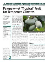 "Pawpaw - A ""Tropical"" Fruit for Tem..."