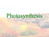 Photosynthesis 100503122339-phpapp01