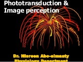 Phototransduction & Visual Pathway ...