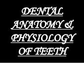 dental anatomy & physiology of perm...