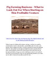 Pig Farming Business - What to Look Out For When Starting on This Profitable Venture