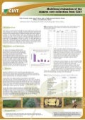 Poster12: Multilocal evaluation of the cassava core collecction from CIAT