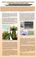 Poster81: Detection and diagnosis of viruses infecting African and American oil palms (Elaeis guineensis and E.oleifera)