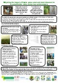 Mitigating the impact of Napier grass smut and stunt diseases for the smallholder dairy sector: key achievements