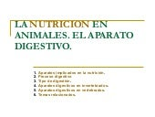 Power point nutrición