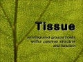 Presentation03 - Plant and Animal Tissues