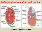 Presentation1.pptx, radiological anatomy of the thigh and leg.