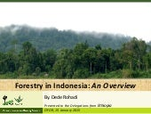 Forestry in Indonesia: An Overview