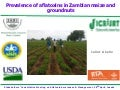 Prevalence of aflatoxins in Zambian maize and groundnuts