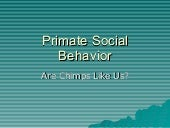 Primate Social Behavior