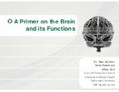 Primer on the brain   revised