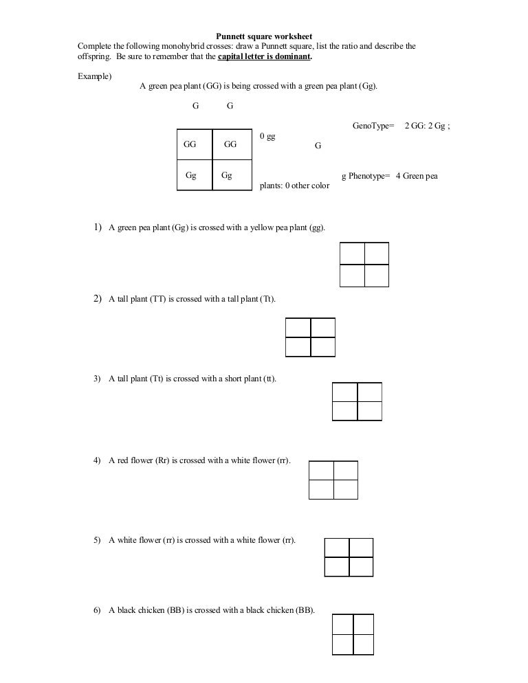 Printables Monohybrid Cross Worksheet punnett square worksheet