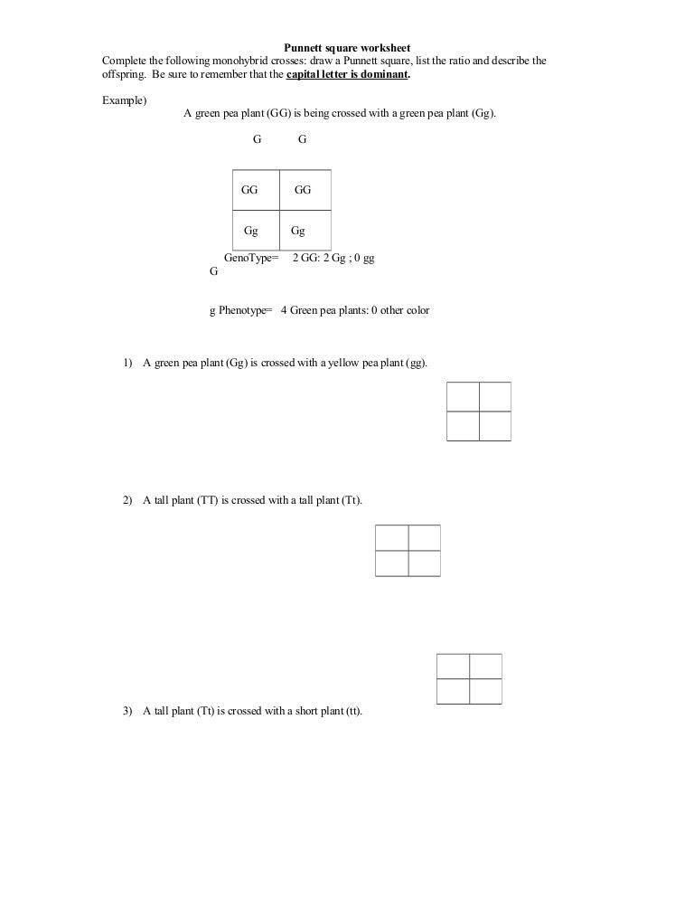 Printables Punnett Square Worksheet Answers worksheets punnet square worksheet laurenpsyk free punnett worksheet