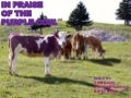 Purple cow ppt