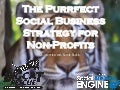 The Purrfect Social Business Strategy for Non-Profits