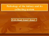 Renal pathology (dr magdy ismail) ...