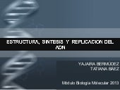 Replicacion del dna 2013