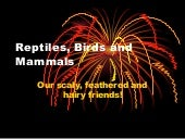 Reptiles, Birds And Mammals