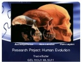 Research project -  human evolution