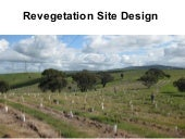 Revegetation Site Design