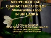 Morphological Characterization of R...