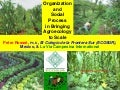 Organization and Social Process in Bringing Agroecology to Scale