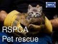 RSPCA - Pet rescue