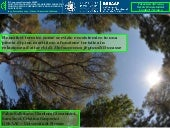 Salbitano thermal comfort in a Pinus pinaster forest stand attacked by Matsucoccus feytaudi