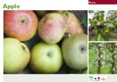 Fruit Growing Instructions ~ Teache...