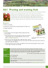Pruning and Training Fruit ~ Teache...