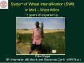 1165 System of Wheat Intensificatio...