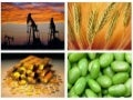 Commodity Market-Updates