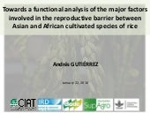Towards a functional analysis of the major factors involved in the reproductive barrier between Asian and African cultivated species of rice