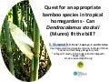 Session 2.2 quest for appropriate bamboo species