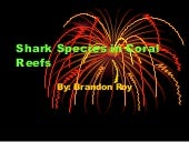 Shark Species In Coral Reefs   Bran...