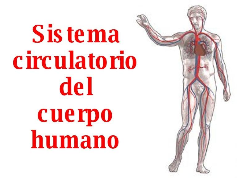 Del Sistema Circulatorio Para Niños Sistema Circulatorio Del