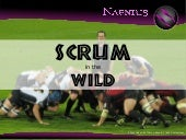 SCRUM in the Wild
