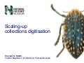 Scaling-up collections digitisation