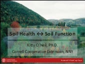 Soil health overview