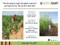 GRM 2011: Development and evaluation of drought-adapted sorghum germplasm for Africa and Australia