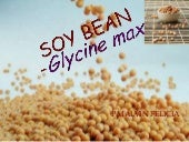 Trading soybean in commodity market