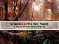 Spencers of the New Forest