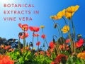 Botanical Extracts in Vine Vera