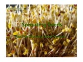 Sprouting Seeds - Tips for Growing ...
