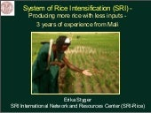 1042 System of Rice Intensification...